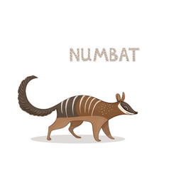 a cartoon cute numbat isolated on a white vector image