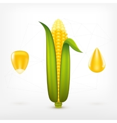 Fresh Corn vector