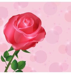 Greeting or invitation card wallpaper with rose vector