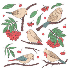 hand drawn set of birds branches leaves berries vector image