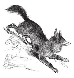 Red Fox vintage engraving vector image vector image