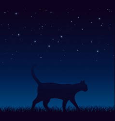 cat walks on grass late at night vector image