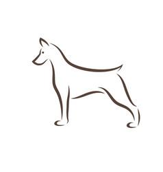 doberman pinscher dog design on white background vector image