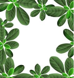 foliage border background vector image