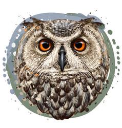 owl realistic artistic color portrait vector image