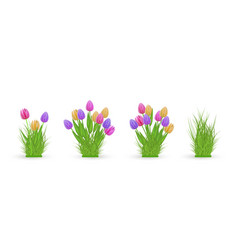 Spring floral tulip and grass bundles of different vector