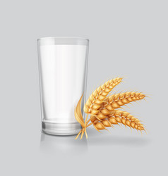 wheat ears spikelets and milk in drinking glass vector image