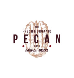 emblem with type design and hand drawn pecan nut vector image
