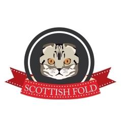 Flat icon pedigreed cat scottish fold vector