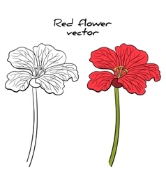 Isolated Red Flower vector image