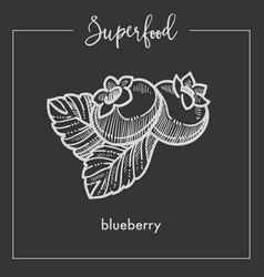ripe sweet blueberry with leaves monochrome vector image