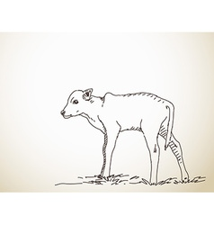 Sketch of calf vector