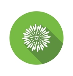 Chrysanthemum flower icon Floral symbol Round vector