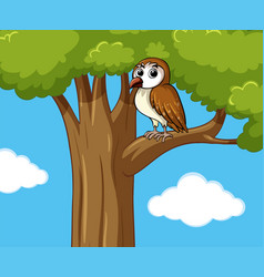 cute owl on the tree vector image