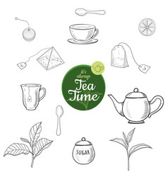 Green and black tea hand drawn ink sketch outline vector