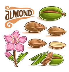 Set almond nuts vector