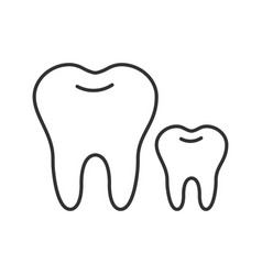 Baby and permanent teeth linear icon vector