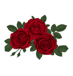 Beautiful bouquet with three red roses and leaves vector