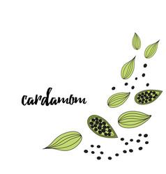 cardamom spice hand drawn style vector image