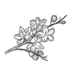 Cherry blossom sketch vector