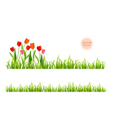 flowers and grass set vector image