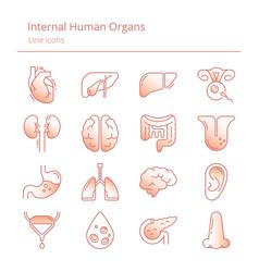 Set color linear icons human organs vector