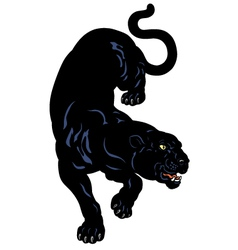 black panther vector image