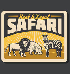 African lion hippo and zebra animals vector