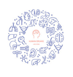 Circular template linear icons human vector