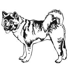 decorative standing portrait of american akita vector image
