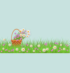 Green grass daisy chamomile wicker basket vector