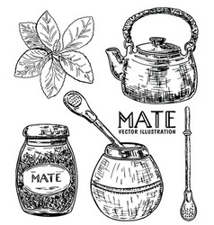 Ink hand drawn sketch style yerba mate tea vector