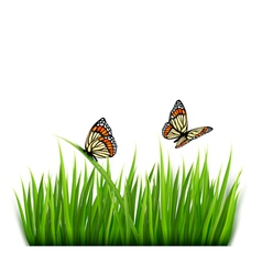 Nature grass butterflies background vector image