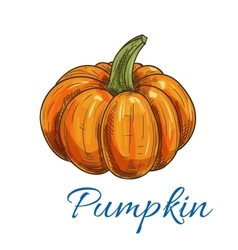Orange autumn pumpkin vegetable sketch vector image