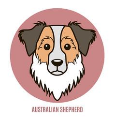 Portrait australian shepherd vector