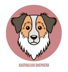 Portrait of australian shepherd vector