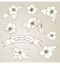 Set of hand drawn apple flowers vector