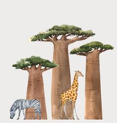 Watercolor baobab adansonia african tree vector