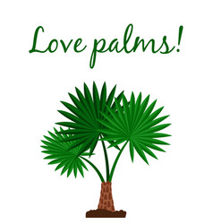 washingtonia palm tree poster vector image vector image