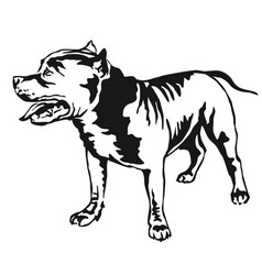 Decorative standing portrait of american pit bull vector