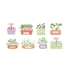 Micro greens sprouts boxes cartoon set salad food vector