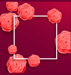 beautiful blooming rose flowers on purple vector image