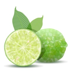 fresh lime vector image vector image