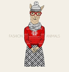 Alpaca hipster dressed up in winter jacquard vector