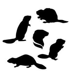 Beaver set vector image