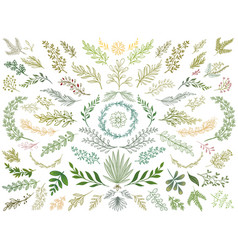 decor leaves hand drawn greenery branches nature vector image