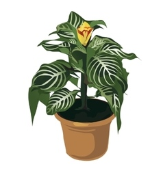 Decorative yellow flower in pot flowers isolated vector image