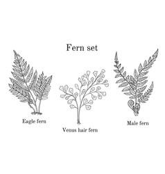 Forest fern set vector