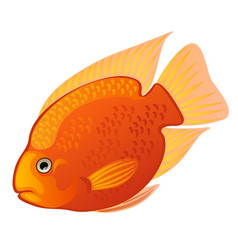 tropical cartoon fish orange midas cichlid or vector image