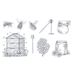 Honey bees engraving hand drawn beekeeping vector